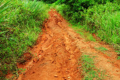 Off road track. In forest stock images