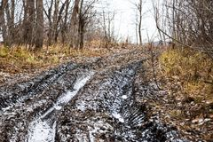 Off-road track in autumn forest Stock Images