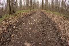 Off-road track in autumn forest. Dirty autumn road in a deserted forest. Off-road track in autumn forest royalty free stock photo
