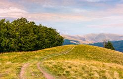 Off road trail through hills of Carpathians. Off road trail through grassy hills of Carpathians with beech forests. beautiful landscape of Svydovets mountain Stock Photos