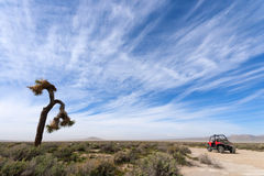 Off Road Vehicle and Joshua Tree Stock Photography