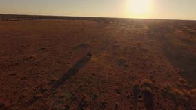 The Off-road vehicle is riding in the rays of the African sunset in the savannah. stock video footage