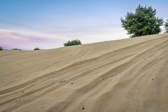 Off road vehicle tracks on sand dune Stock Image