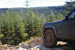 Off roading in the woods. Stock Photos