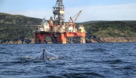 Oil Rig and Humpback whale. Off shore oil rig and a humpback whale in a harbour in Newfoundland Stock Photos