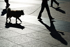 Off to work. With the dog. Sunny place royalty free stock photos