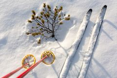 Off-track skis and ski poles on snow with small pine Stock Photo