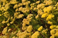 Offcenter fokuserade blommor Arkivfoto