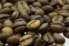 Сoffee arabica. Royalty Free Stock Photos