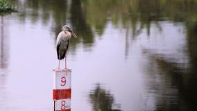 Offen-berechneter Storchvogel Stockfoto
