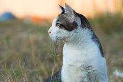Offen von der thailändischen netten Katze stockfoto