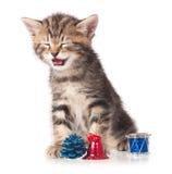 Offended kitten Stock Photo