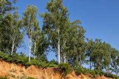 Offene Baumwurzeln wegen der Erdrutsche, Bodenerosion, nach Straßenschnitt stockfotografie