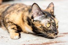 Offene Katze Stockfotografie