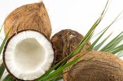 Offene und ganze Kokosnüsse und Palmblätter Stockbilder