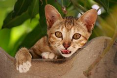 Offener Mund Brown-Katze und Schauen vorwärts auf dem Dach lizenzfreie stockfotografie