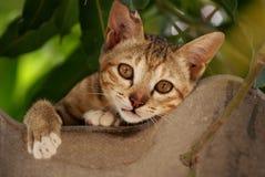 Offener Mund Brown-Katze und Schauen vorwärts auf dem Dach lizenzfreie stockfotos