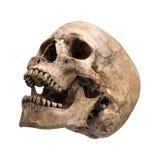 Offener Mund menschlichen Schädels Sidetview lokalisiert Stockbilder