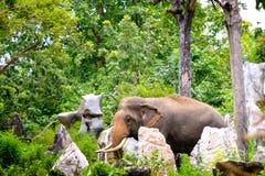 Offenes Bild des Elefanten im Dschungel stockfoto