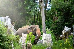 Offenes Bild des Elefanten im Dschungel stockbild