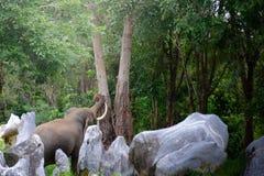 Offenes Bild des Elefanten im Dschungel mit dem hellen hellen Glänzen zum König des Dschungels stockfotos