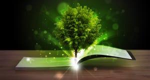 Offenes Buch mit magischem grünem Baum und Strahlen des Lichtes Stockfoto