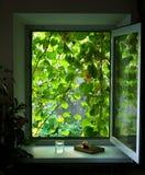 Offenes Fenster mit Kletterpflanzen Stockfoto