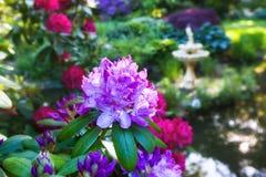 Offentliga trädgårdar Arkivbild