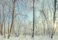 Offentligt parkera från Europa med träd och filialer som täckas med snö och is, bänkar, den ljusa polen, landskap Royaltyfri Foto