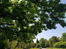 Offentligt parkera med fältet för grönt gräs arkivbilder