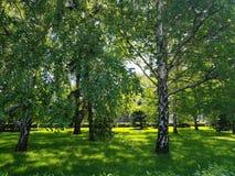 Offentligt parkera med fältet för grönt gräs arkivbild