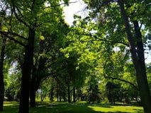 Offentligt parkera med fältet för grönt gräs royaltyfri foto