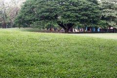 Offentligt parkera med fältet och perspektiv för grönt gräs för att kopiera utrymme Fotografering för Bildbyråer
