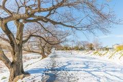 Offentligt parkera med vit snö Fotografering för Bildbyråer