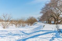 Offentligt parkera med vit snö Arkivfoto