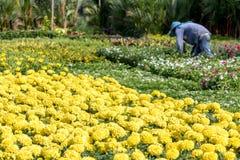 Offer flowers in gardening on the street of Bangkok. Stock Photo