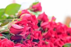 Offer. röd ros Arkivfoto