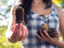 Offering choice with pine cone Royalty Free Stock Image