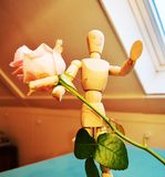 Offering a rose, symbolic royalty free stock photos