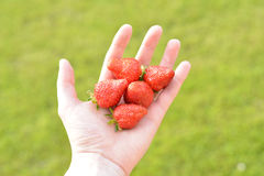 Offering strawberries Stock Photography