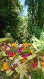 Offerings balinese. Outside temple offerings Bali Stock Photography