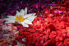 Offerings of red and white flowers Royalty Free Stock Photos