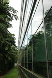 Office. And tree, Singapore near Funan Center royalty free stock photo