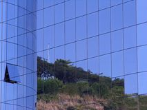 Office building. Glass and steel office building with reflex of trees Stock Photo