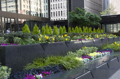 Office building front garden Royalty Free Stock Photo