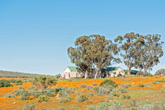 Office buildings of the Namaqua National Park at Skilpad Royalty Free Stock Image