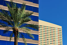 Office buildings and palm tree Stock Photo