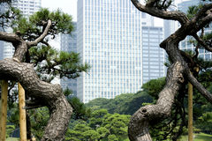 Office buildings surrounding Japanese garden Stock Photography