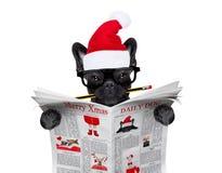 Dog  reading newspaper on christmas holidays Stock Image
