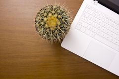 Office cactus Stock Image